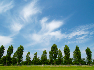 立木と青空と雲の写真素材 [FYI03419844]