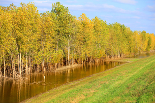 秋の色の木と水に生える木の写真素材 [FYI03420140]