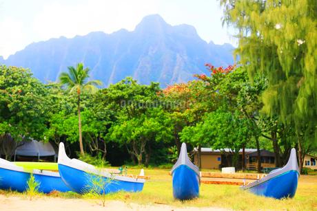 カヌーとヤシの木とハワイの山の写真素材 [FYI03420150]