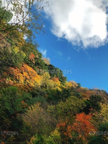 石鎚山の紅葉の写真素材 [FYI03420251]