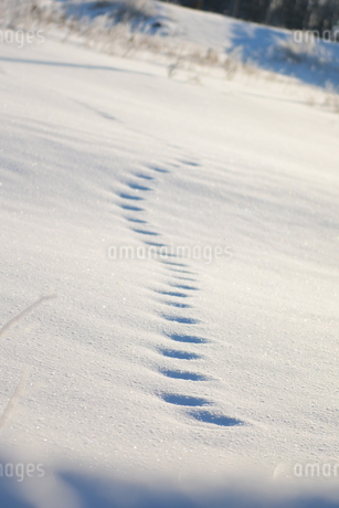 足跡 雪の写真素材 [FYI03420265]