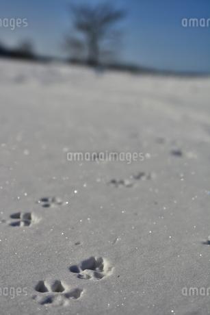 足跡 雪の写真素材 [FYI03420266]