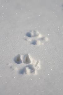 足跡 雪の写真素材 [FYI03420268]