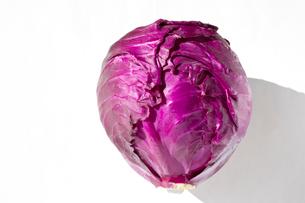 レッドキャベツ 紫キャベツの写真素材 [FYI03420289]