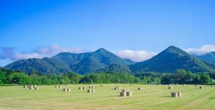 北海道 自然 風景 パノラマ 牧草地と青空の写真素材 [FYI03420293]