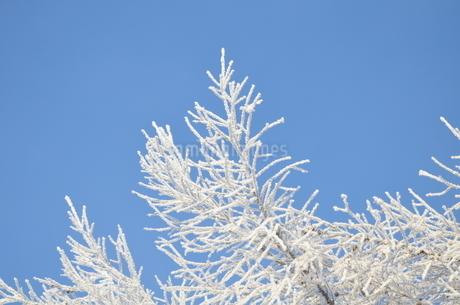 樹氷の写真素材 [FYI03420382]