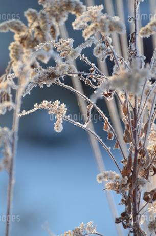 樹氷の写真素材 [FYI03420392]