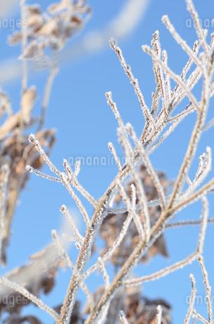樹氷の写真素材 [FYI03420394]