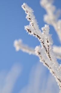 樹氷の写真素材 [FYI03420407]