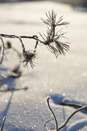 樹氷の写真素材 [FYI03420414]