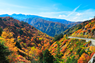 秋の白山白川郷ホワイトロードより白山を望むの写真素材 [FYI03420533]