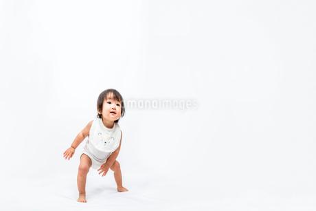白背景で、やっと立ち歩く0才児の女の子の赤ちゃんの写真素材 [FYI03420540]