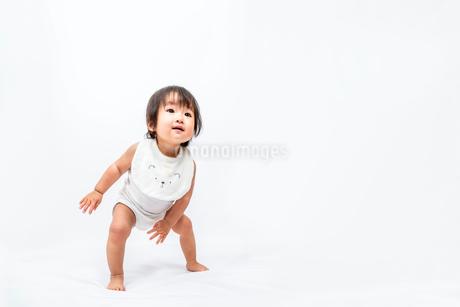 白背景で、やっと立ち歩く0才児の女の子の赤ちゃんの写真素材 [FYI03420541]
