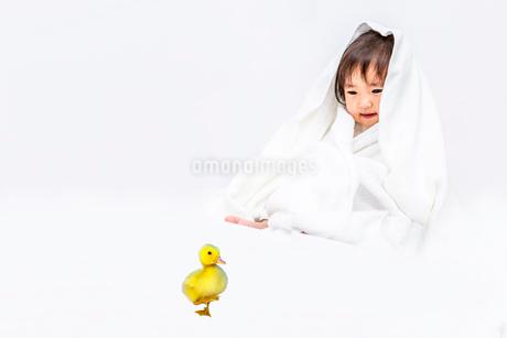 バスタオルを被りアヒルのヒヨコを見つめる女の子の赤ちゃん。健康、共生、生命イメージの写真素材 [FYI03420549]