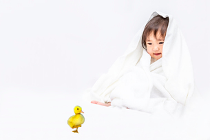 バスタオルを被りアヒルのヒヨコを見つめる女の子の赤ちゃん。健康、共生、生命イメージの写真素材 [FYI03420550]