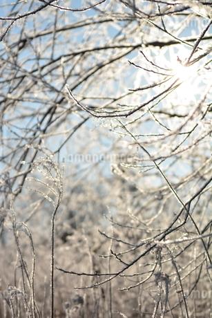 樹氷の写真素材 [FYI03420565]