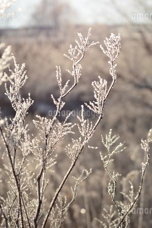 樹氷の写真素材 [FYI03420572]