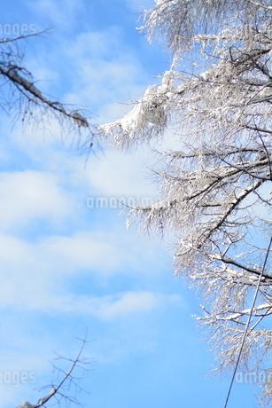 樹氷の写真素材 [FYI03420575]