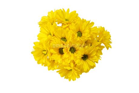 菊の花束の写真素材 [FYI03420587]