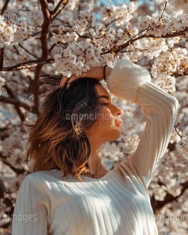 sakuraの写真素材 [FYI03420608]