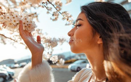 sakuraの写真素材 [FYI03420609]