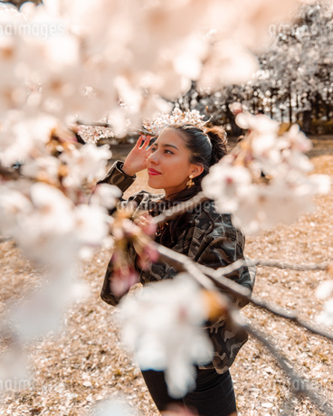 sakuraの写真素材 [FYI03420610]