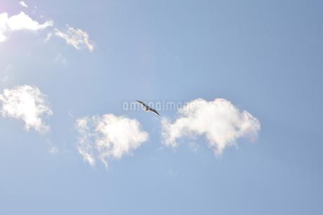 空飛ぶ鳥の写真素材 [FYI03420611]