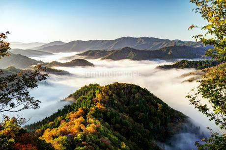 雲海のおにゅう谷 日本 滋賀県 高島市の写真素材 [FYI03421054]