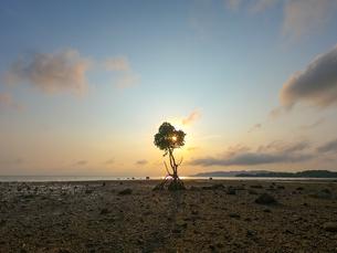 マングローブと夕日の写真素材 [FYI03421139]