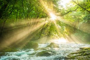 菊池渓谷の光芒の写真素材 [FYI03421163]