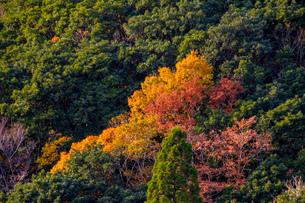 竜ヶ岳の写真素材 [FYI03421193]