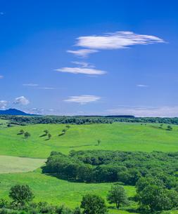 北海道 自然 風景 牧草地と青空の写真素材 [FYI03421334]