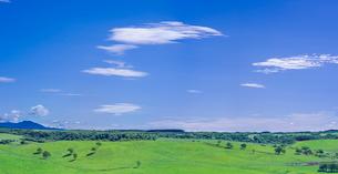 北海道 自然 風景 パノラマ 牧草地と青空の写真素材 [FYI03421335]