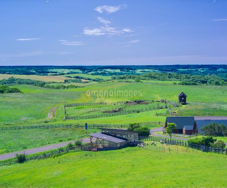北海道 自然 風景 牧草地と青空の写真素材 [FYI03421356]