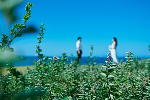 ウェディング 花畑の写真素材 [FYI03421393]