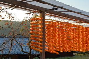 かつらぎ町 串柿の里の写真素材 [FYI03421442]