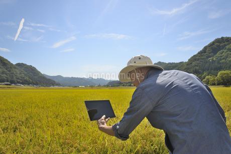 秋の水田にタブレットを持ったシニアの写真素材 [FYI03421531]