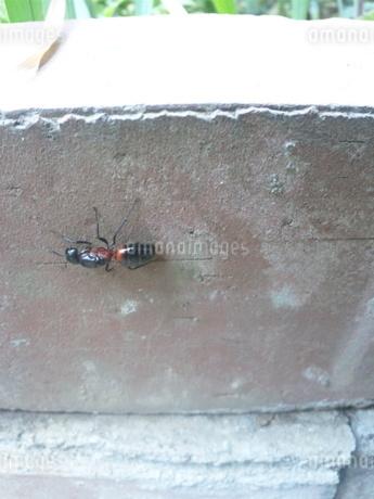巨大なアリの写真素材 [FYI03421694]