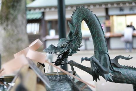 手水舎の龍の写真素材 [FYI03421732]