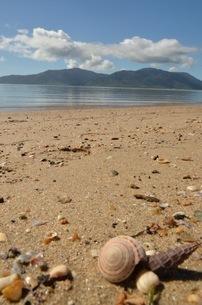ビーチと貝殻の写真素材 [FYI03421855]