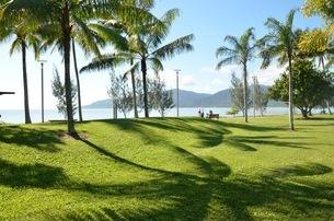 椰子の庭の写真素材 [FYI03421856]