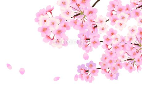 桜 背景素材 06のイラスト素材 [FYI03422082]