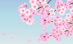 桜 背景素材 05のイラスト素材 [FYI03422083]