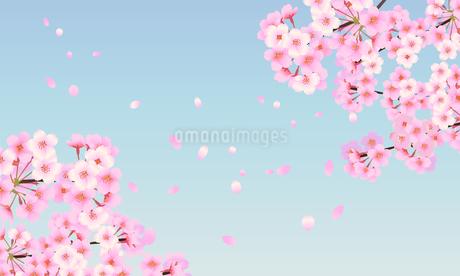 桜 背景素材 04のイラスト素材 [FYI03422084]