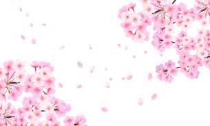 桜 背景素材 03のイラスト素材 [FYI03422085]