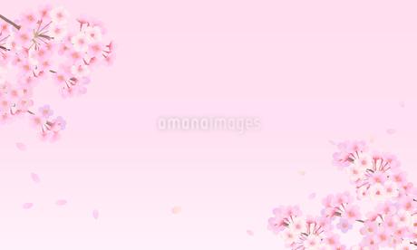 桜 背景素材 02のイラスト素材 [FYI03422086]