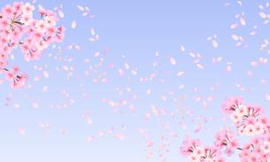 桜 背景素材 01のイラスト素材 [FYI03422087]