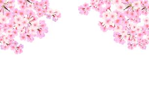 桜 背景のイラスト素材 [FYI03422131]