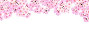 桜のフレームのイラスト素材 [FYI03422132]