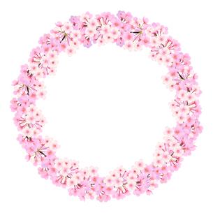 丸い桜のイラストフレームのイラスト素材 [FYI03422133]